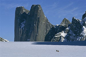 Mount Asgard with skiiers hauling sleds in foreground on Turner Glacier, Auyuittuq National Park, Baffin Island, Canada  -  Grant Dixon