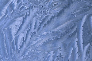 Ice and frost patterns on window  -  Grant Dixon