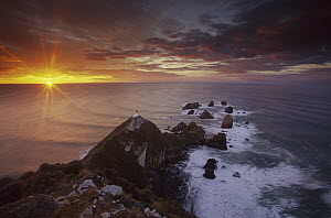 Nugget Point lighthouse at sunrise, South Island, New Zealand - Colin Monteath
