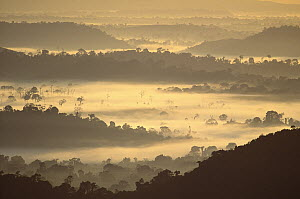 Dawn in the Amazon forest with intense evaporation, Amazon ecosystem, Brazil  -  Claus Meyer