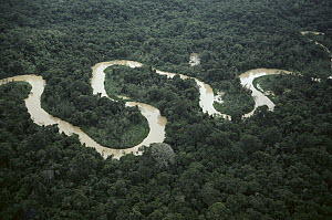 Meandering river in forest, Amazon, Brazil  -  Claus Meyer