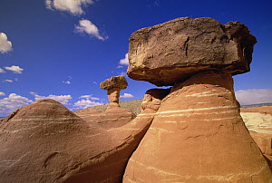 Toadstool Caprocks created by erosion, near Paria River, Grand Staircase-Escalante National Monument, Utah  -  Yva Momatiuk & John Eastcott