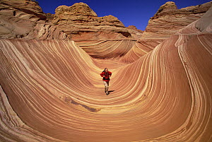 Lone hiker walking along the base of a sandstone butte strong pattern of wavy lines in petrified sand dunes are exposed by erosion, Vermilion Cliffs National Monument, Colorado Plateau, Utah - Yva Momatiuk & John Eastcott