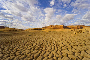 Dry and cracking cakes of silt deposited by Colorado River during flood and drying during drought, fall morning, Glen Canyon National Recreation Area, Utah  -  Yva Momatiuk & John Eastcott