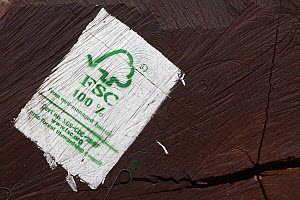 Logged wood coming from Congo with FSC label, Cameroon  -  Cyril Ruoso