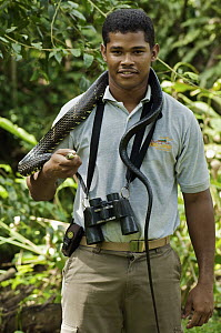 Tropical Rat Snake (Spilotes pullatus) around local guide's neck, Colon, Panama - James Christensen