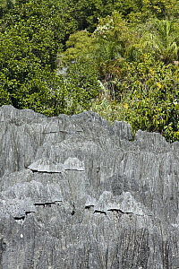 View over tsingy rock formations and surrounding dry decidious forest, Bemaraha National Park, western Madagascar - Vincent Grafhorst