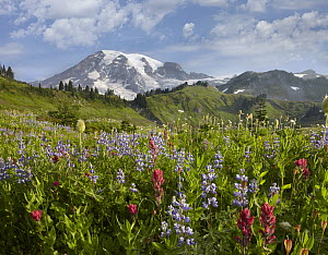 Paradise Meadow and Mount Rainier, Mount Rainier National Park, Washington - Tim Fitzharris