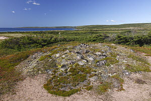 Native American burial mound from the Maritime Archaic, Labrador, Canada - Scott Leslie