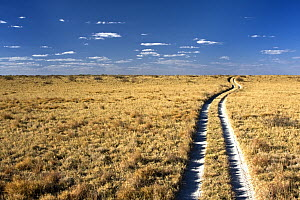 Dirt track through the grassy plains, Makgadikgadi, Botswana  -  Vincent Grafhorst
