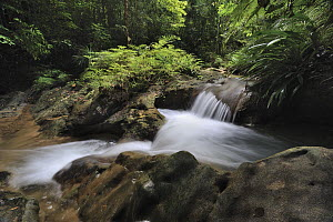 Small waterfall in rainforest interior, Lambir Hills National Park, Borneo, Malaysia - Chien Lee