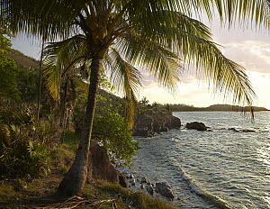 Wilkes Point at sunset with palm trees, Roatan Island, Honduras  -  Tim Fitzharris