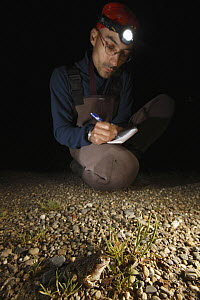 Common Spadefoot (Pelobates fuscus) biologist collecting data, Alsace, France - Cyril Ruoso