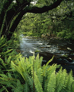 Catlins River, Catlins Forest Park, Southland, New Zealand  -  Rob Brown