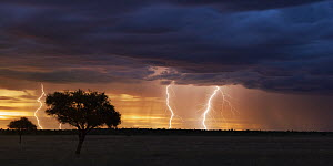 Thunder storm with lightning bolts at sunset over Kalahari, Khutse Game Reserve, Botswana - Vincent Grafhorst