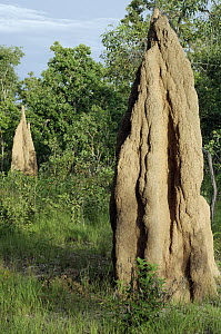 Termite mounds, Wasur National Park, Indonesia  -  Chien Lee