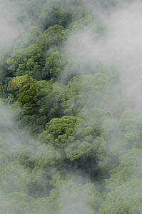 Virgin lowland rainforest shrouded in mist, Gunung Penrissen, Sarawak, Borneo, Malaysia  -  Chien Lee