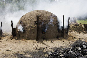 Charcoal kilns in planted eucalyptus forest, Bahia, Brazil - Luciano Candisani
