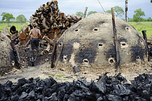 Charcoal kilns in unprotected forest is one of the main threats to habitat, Pantanal, Brazil - Luciano Candisani