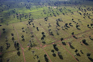 Large area of forest cleared for cattle grazing, Pantanal, Brazil - Luciano Candisani