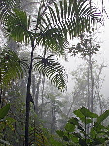 Cloud forest, Tandayapa Valley, western slope of Andes, Ecuador  -  Michael & Patricia Fogden