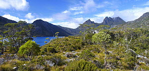Shrubland and Cradle Mountain, Cradle Mountain-Lake Saint Clair National Park, Tasmania, Australia  -  Martin Willis