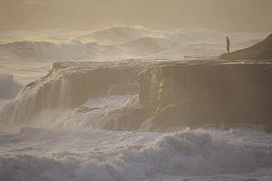 Man overlooking stormy surf on rocks, northern California  -  Bob Barbour