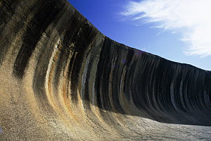 Wave rock, 15 meters high and 110 meters long curved granite cliff face stained with dissolved carbonates and iron hydroxide, approximately 2700 million years old, Western Australia  -  Michael & Patricia Fogden