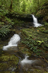 Stream cascading through primary forest, Kubah National Park, Borneo, Malaysia  -  Chien Lee