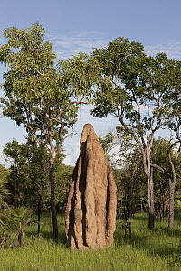 Cathedral termite mound, Litchfield National Park, Northern Territory, Australia - Ingo Arndt