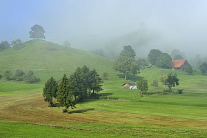Moraine hills with trees in the fog, Zug, Switzerland  -  Thomas Marent