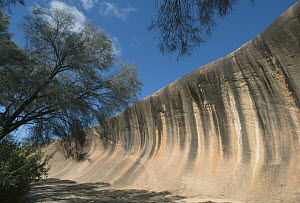 Wave rock, 15 meters high and 110 meters long curved granite cliff face stained with dissolved carbonates and iron hydroxide, approximately 2700 million years old, Hyden, Western Australia, Australia  -  Kevin Schafer