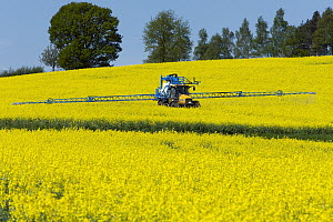 Oil Seed Rape (Brassica napus) field being sprayed with insecticide, Germany  -  Duncan Usher