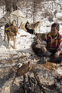 Tsataan man cooking ribs over fire while dog watches and Reindeer investigates teepee, Hunkher Mountains, Mongolia  -  Colin Monteath