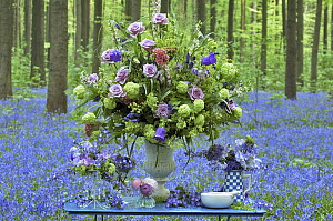 English Bluebell (Hyacinthoides nonscripta) flowers and boquete  -  Jan Vermeer