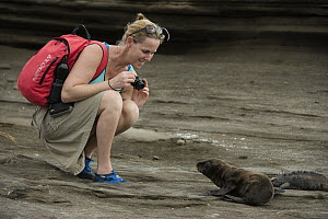 Galapagos Sea Lion (Zalophus wollebaeki) pup and tourist, Galapagos Islands, Ecuador - Pete Oxford