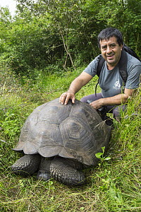 Eastern Santa Cruz Tortoise (Chelonoidis donfaustoi), a newly described species, with Wacho Tapia, the director of the Giant Tortoise Restoration Initiative and co-author of the new species descriptio...  -  Tui De Roy