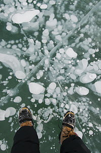 Frozen gas bubbles beneath surface of frozen lake, Abraham Lake, Canadian Rockies, Alberta, Canada  -  Kevin Schafer