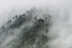 Cloud forest canopy, Andes, Ecuador - Pete Oxford