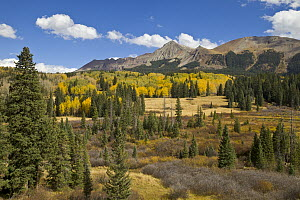 Fall colors in mountain meadow, Rocky Mountains, Colorado - Yva Momatiuk & John Eastcott