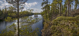 Shoreline, Discovery Lake, Boundary Waters Canoe Area Wilderness, Minnesota - Jim Brandenburg