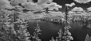 Forest on lake shore, Judd Lake, Superior National Forest, Minnesota - Jim Brandenburg