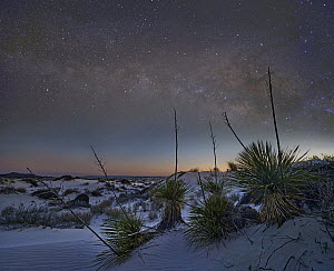Salt flats at night, Guadalupe Mountains National Park, Texas  -  Tim Fitzharris