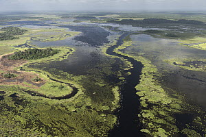Coastal wetland, Abari Swamps, Guyana - Pete Oxford