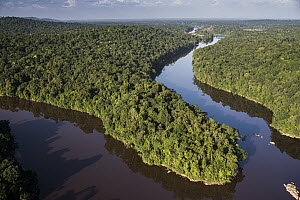 River in rainforest, Kaieteur Falls, Potaro River, Kaieteur National Park, Guyana  -  Pete Oxford