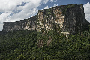 Ayangaik Mountain, Pacaraima Mountains, Guyana  -  Pete Oxford