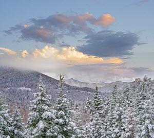 Coniferous forest in winter, Aspen Vista, Santa Fe National Forest, New Mexico  -  Tim Fitzharris