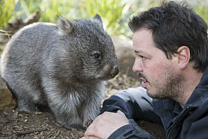 Common Wombat (Vombatus ursinus) orphan with sanctuary director, Greg Irons, Bonorong Wildlife Sanctuary, Tasmania, Australia  -  Suzi Eszterhas