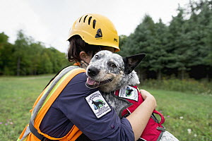 Domestic Dog (Canis familiaris) named Zilly, a scent detection dog with Conservation Canines, being hugged by her handler during wind farm inspection, New York - Jaymi Heimbuch