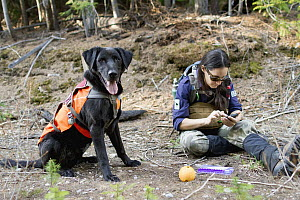 Domestic Dog (Canis familiaris) named Scooby, a scent detection dog with Conservation Canines, found a carnivore scat that field technician Jennifer Hartman logs into data entry, northeast Washington - Jaymi Heimbuch